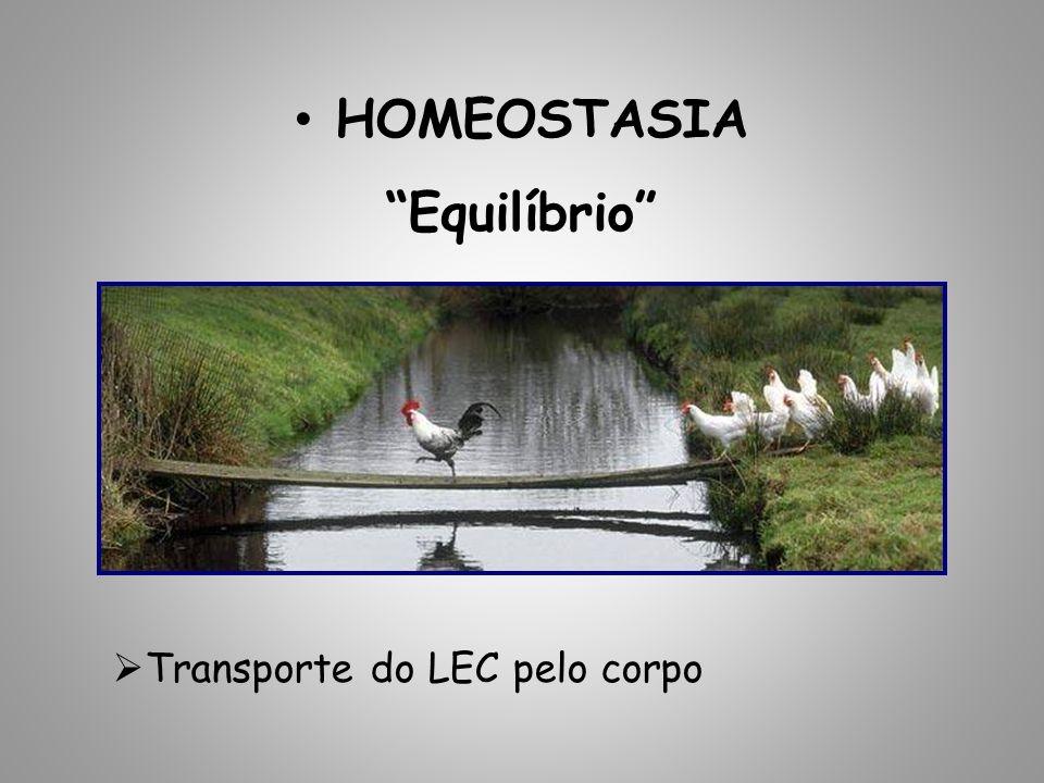 HOMEOSTASIA Equilíbrio