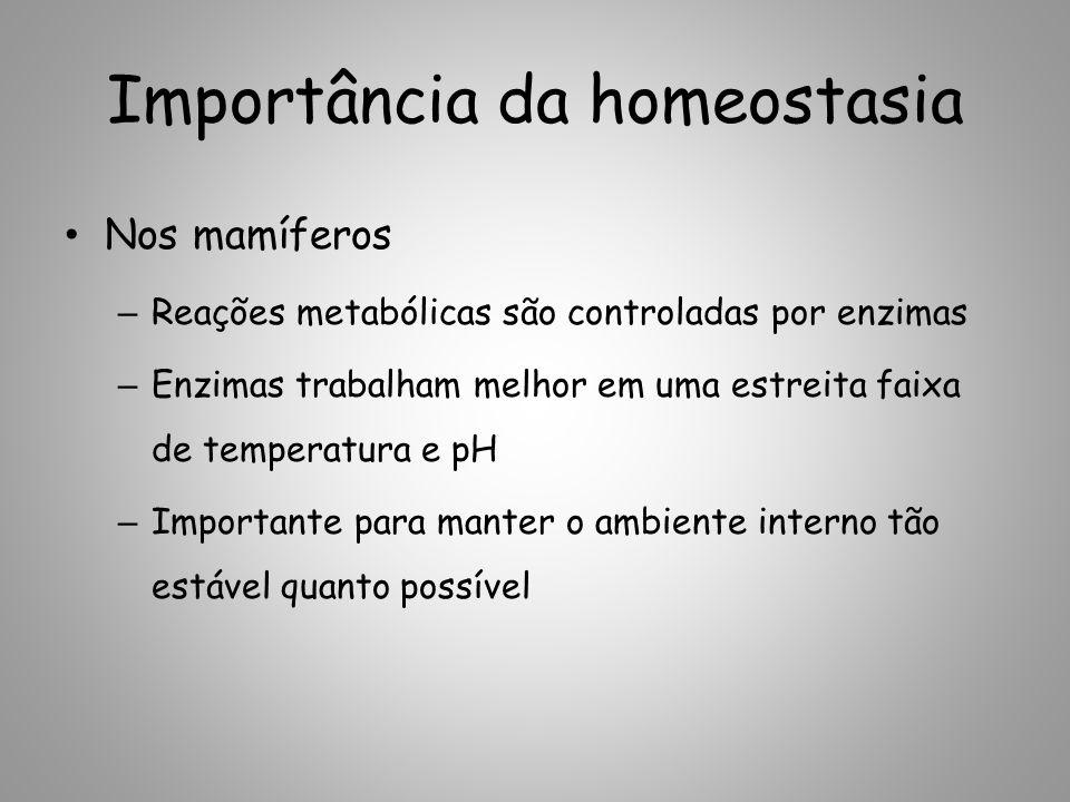 Importância da homeostasia