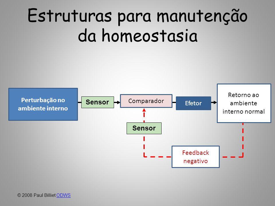 Estruturas para manutenção da homeostasia
