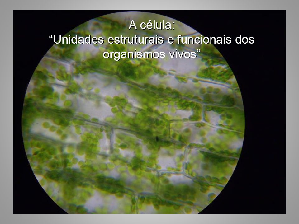 Interpretação Todos os organismos são formados por uma ou mais células.