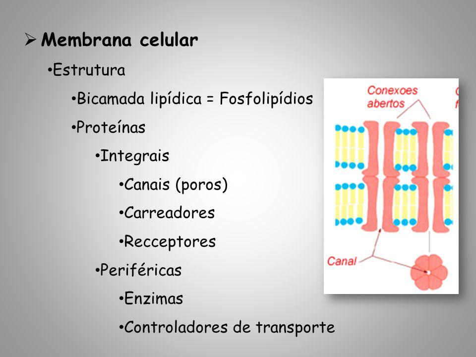 Membrana celular Estrutura Bicamada lipídica = Fosfolipídios Proteínas