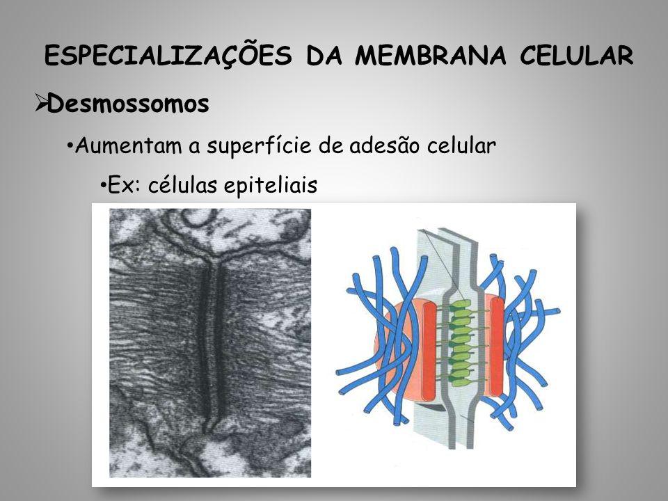 ESPECIALIZAÇÕES DA MEMBRANA CELULAR Desmossomos