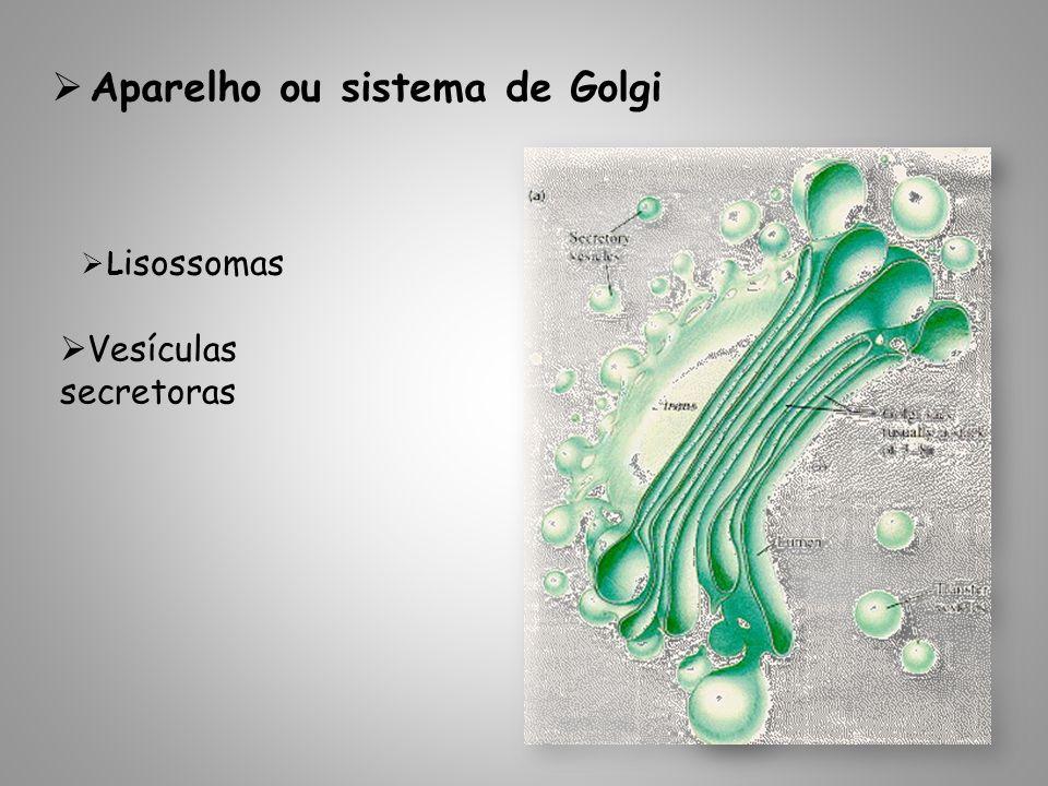 Aparelho ou sistema de Golgi