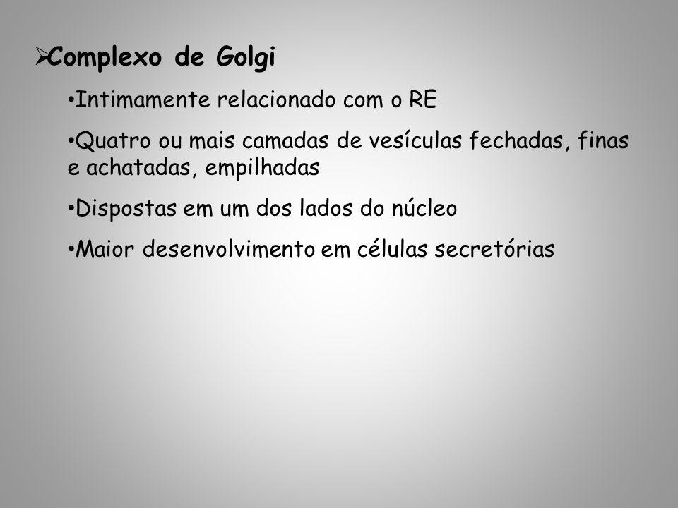 Complexo de Golgi Intimamente relacionado com o RE