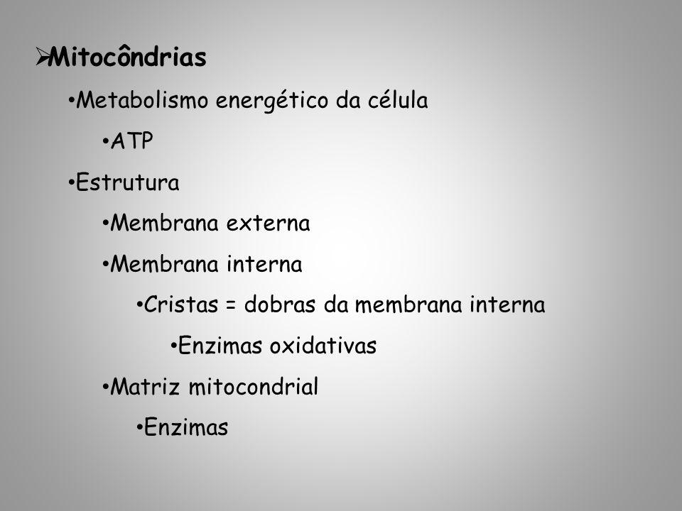 Mitocôndrias Metabolismo energético da célula ATP Estrutura