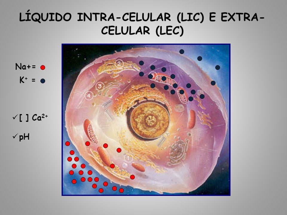Líquido intra-celular (LIC) e extra-celular (LEC)