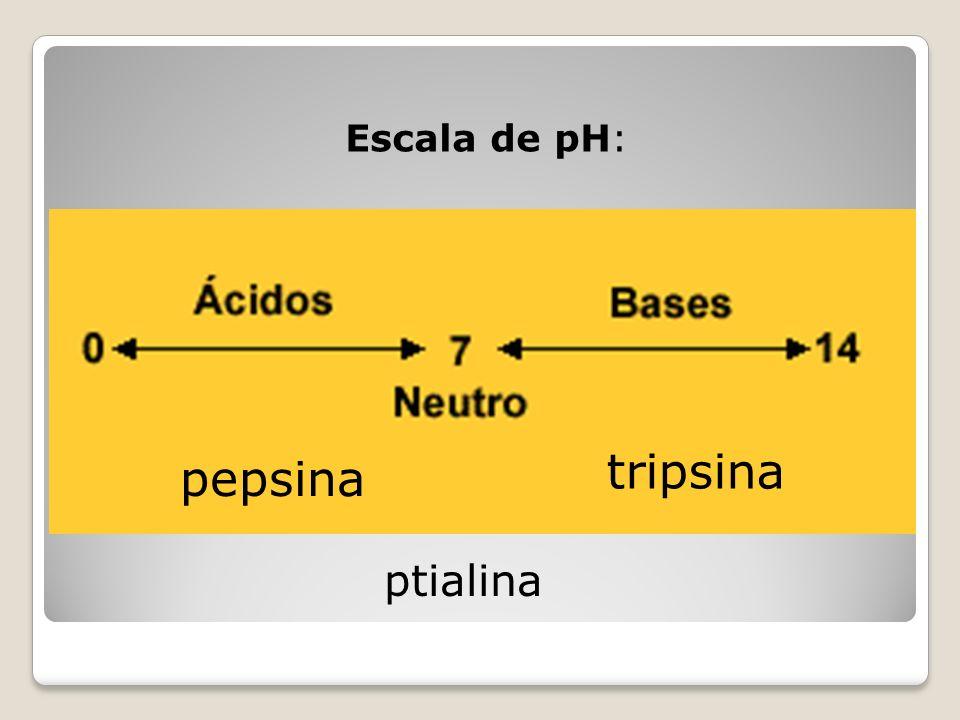 Escala de pH: t tripsina pepsina ptialina