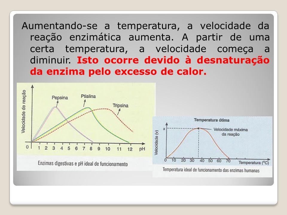 Aumentando-se a temperatura, a velocidade da reação enzimática aumenta