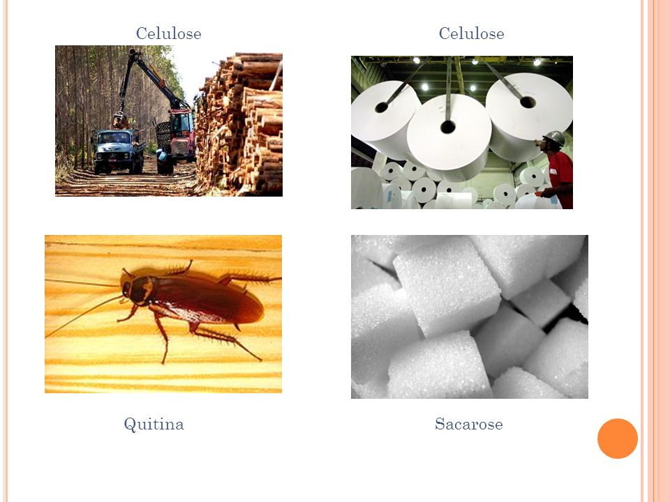 Celulose Celulose Quitina Sacarose.