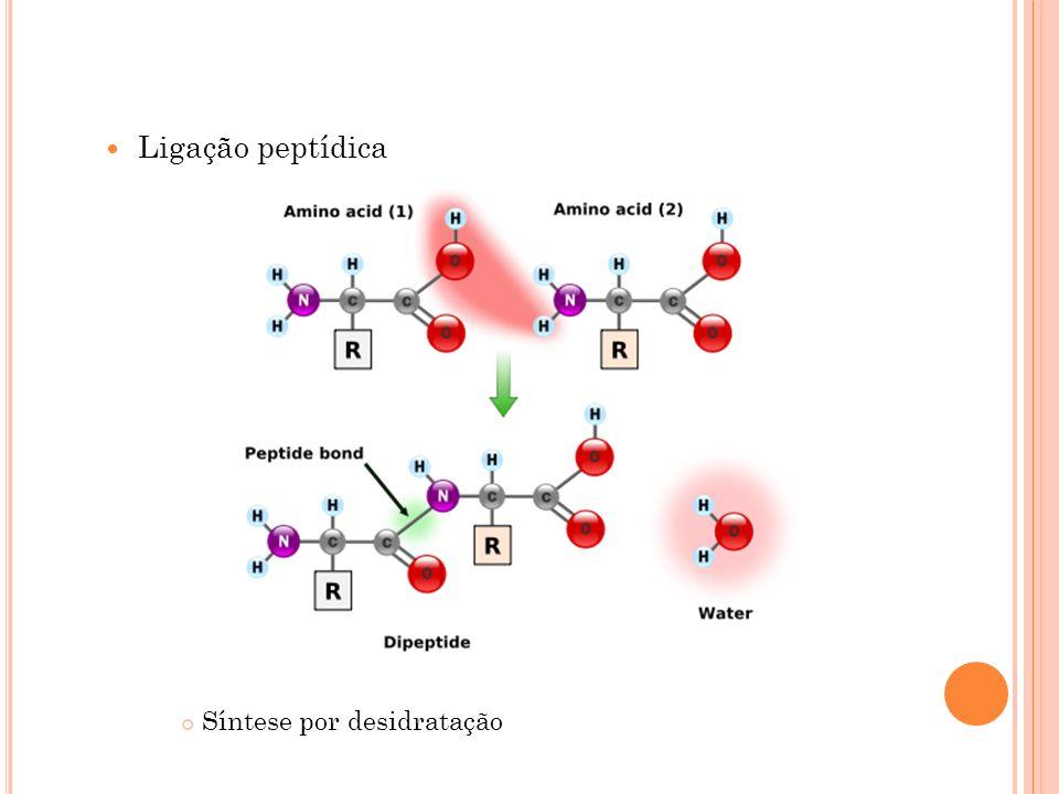 Ligação peptídica Síntese por desidratação