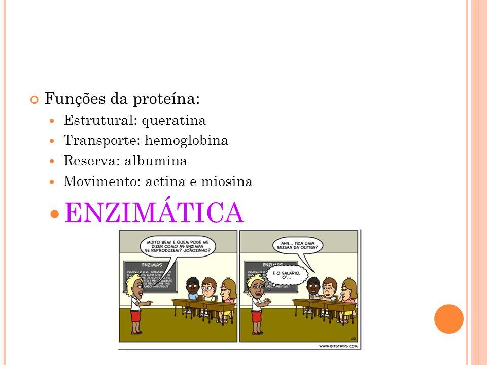 ENZIMÁTICA Funções da proteína: Estrutural: queratina