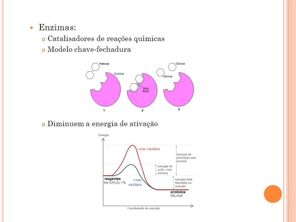 Enzimas: Catalisadores de reações químicas Modelo chave-fechadura
