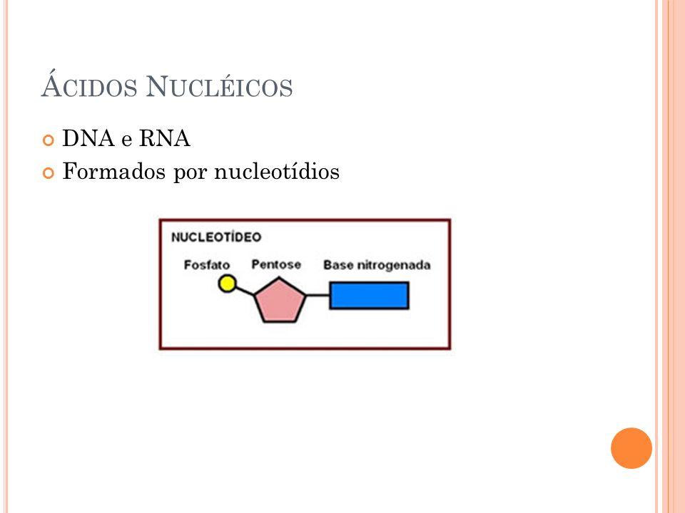 Ácidos Nucléicos DNA e RNA Formados por nucleotídios
