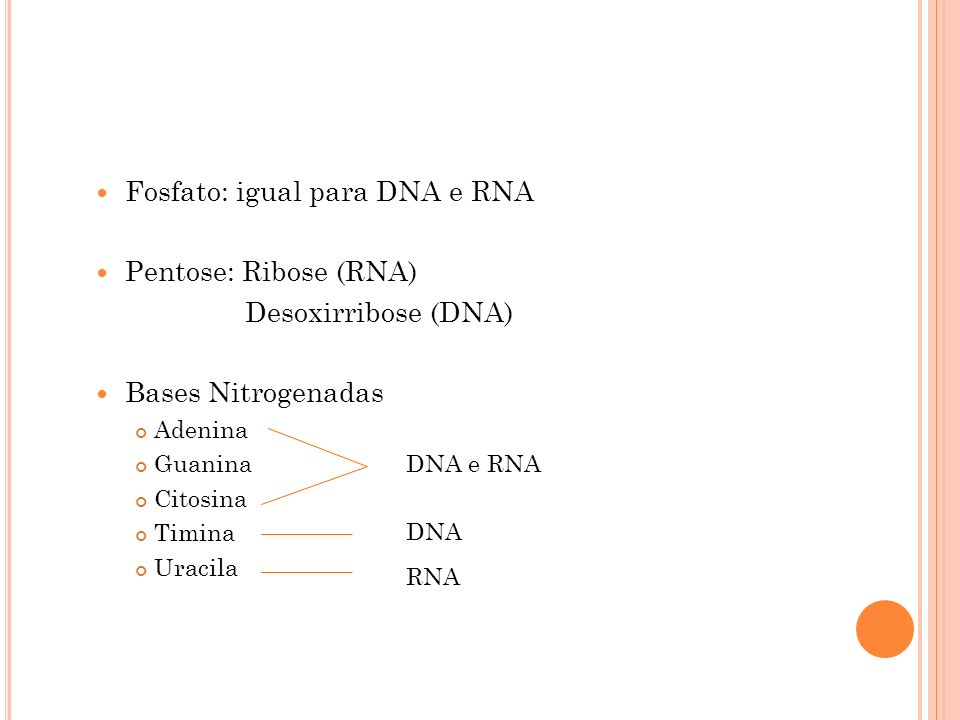 Fosfato: igual para DNA e RNA Pentose: Ribose (RNA)
