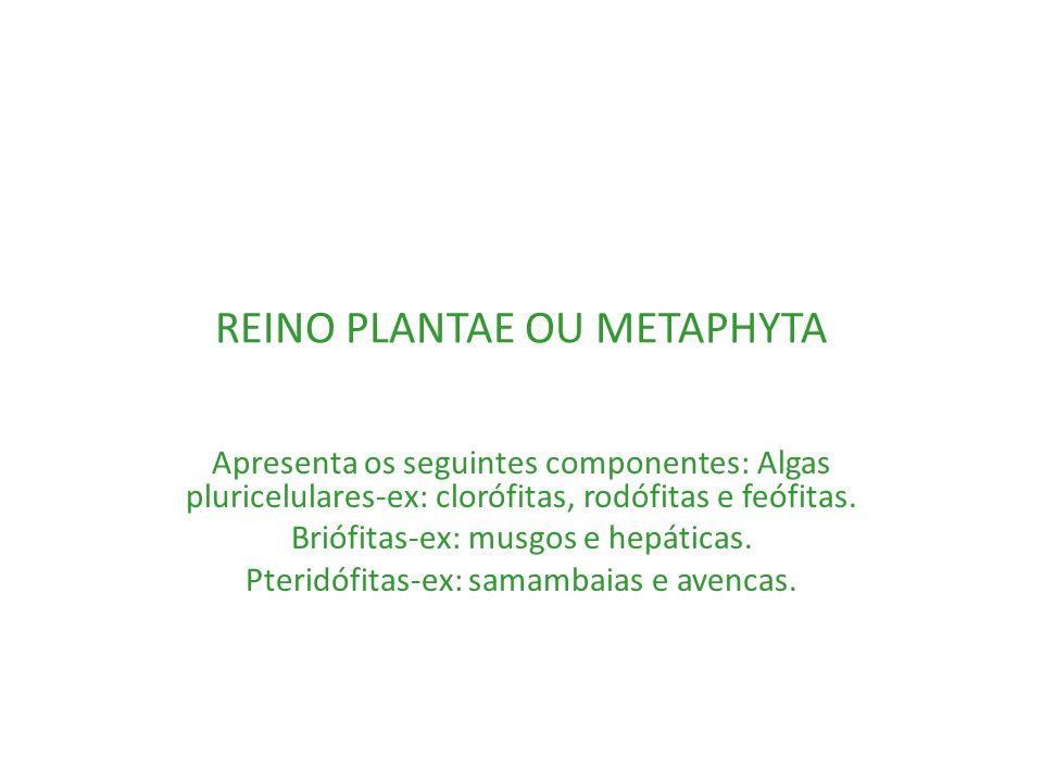REINO PLANTAE OU METAPHYTA