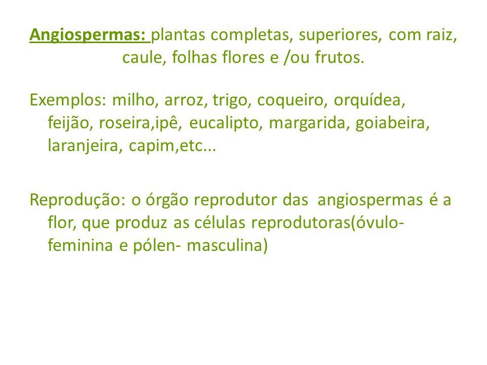 Angiospermas: plantas completas, superiores, com raiz, caule, folhas flores e /ou frutos.