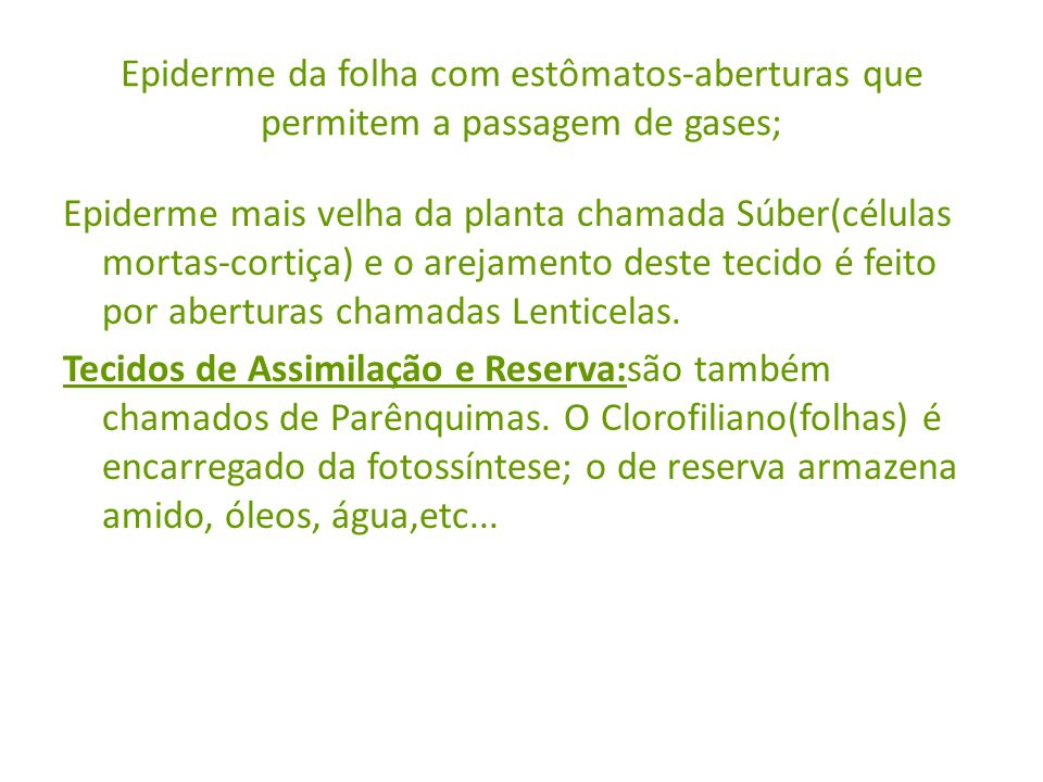 Epiderme da folha com estômatos-aberturas que permitem a passagem de gases;