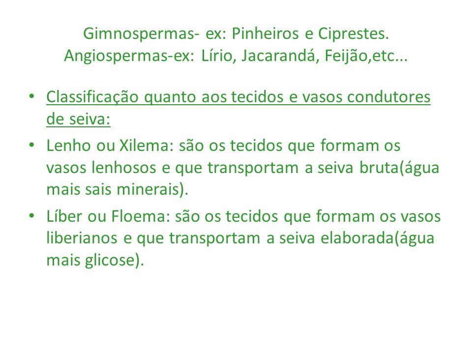 Gimnospermas- ex: Pinheiros e Ciprestes