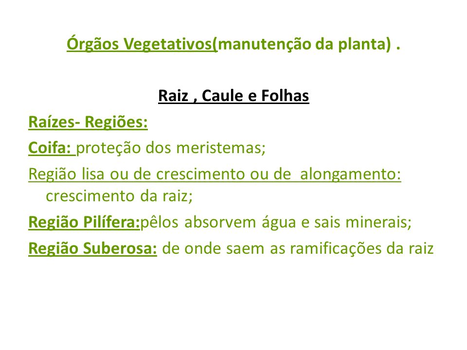 Órgãos Vegetativos(manutenção da planta) .