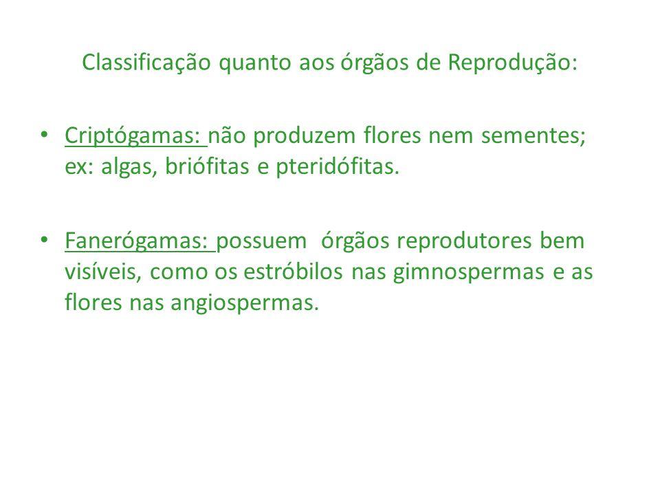 Classificação quanto aos órgãos de Reprodução: