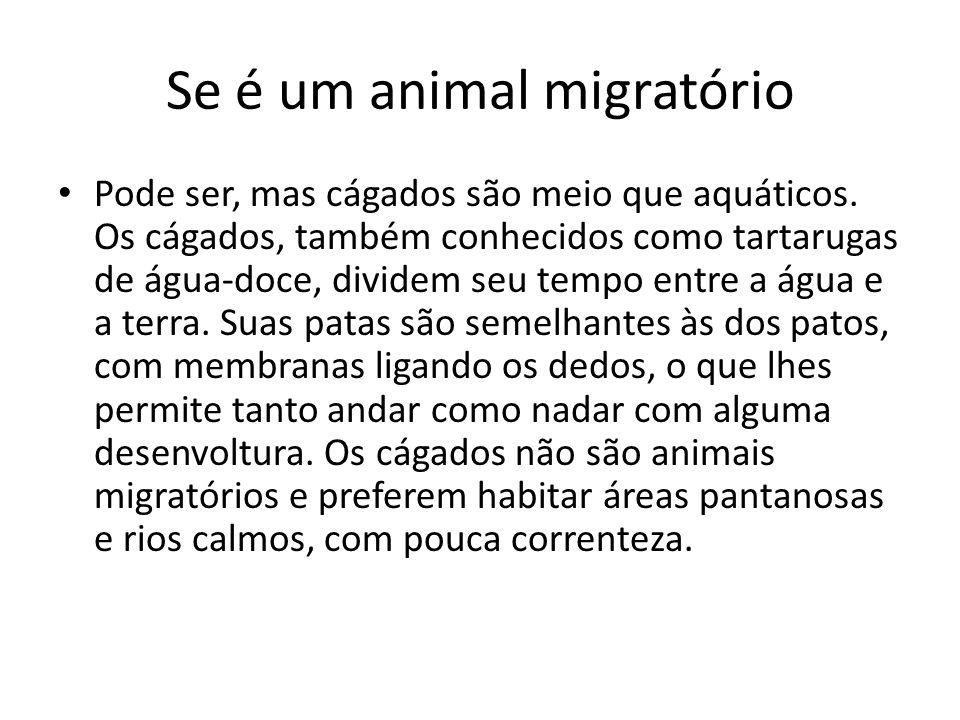 Se é um animal migratório