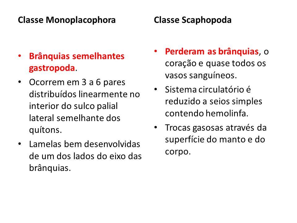 Classe Monoplacophora
