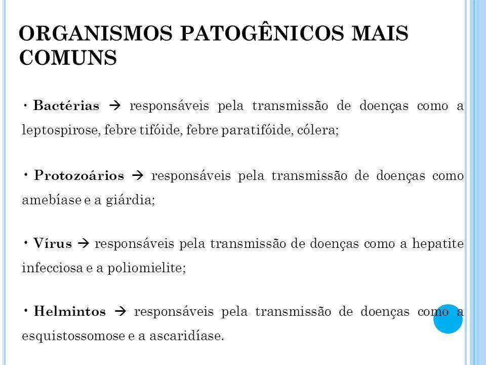 ORGANISMOS PATOGÊNICOS MAIS COMUNS