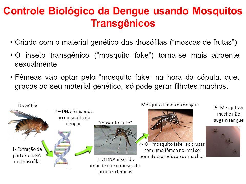 Controle Biológico da Dengue usando Mosquitos Transgênicos