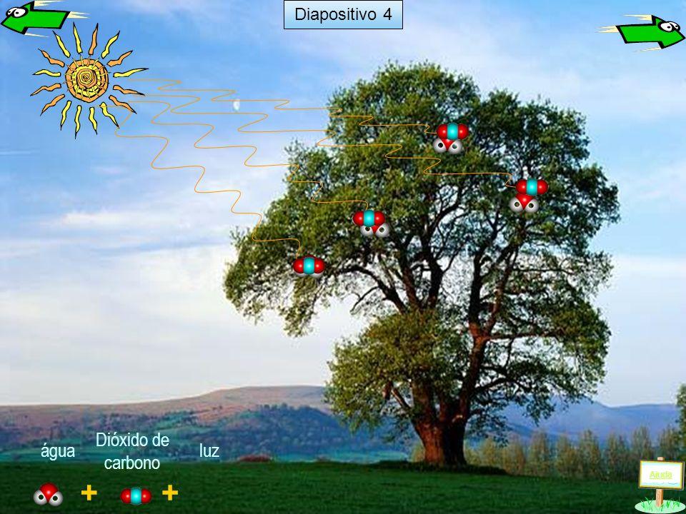 Diapositivo 4 Dióxido de carbono água luz Ajuda + +