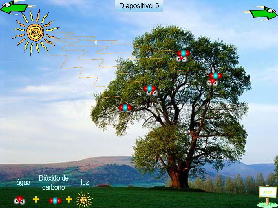 Diapositivo 5 Dióxido de carbono água luz Ajuda + +