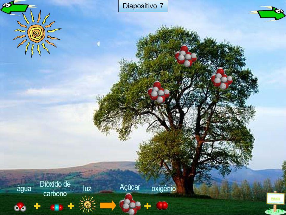 Diapositivo 7 Dióxido de carbono água luz Açúcar oxigénio Ajuda + + +