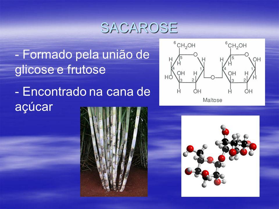 SACAROSE Formado pela união de glicose e frutose