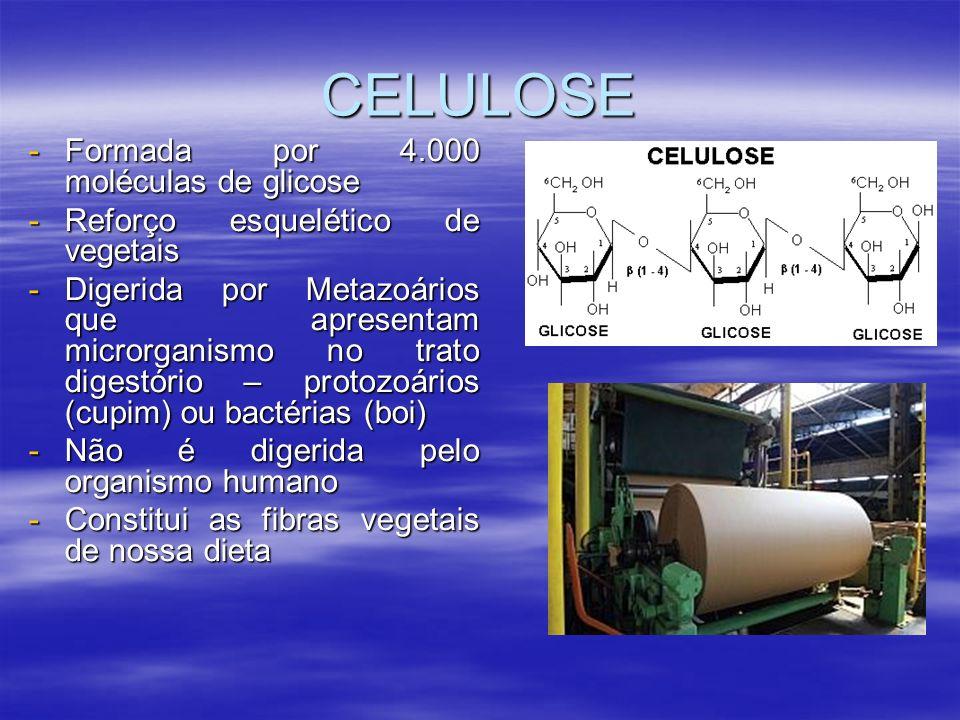CELULOSE Formada por 4.000 moléculas de glicose