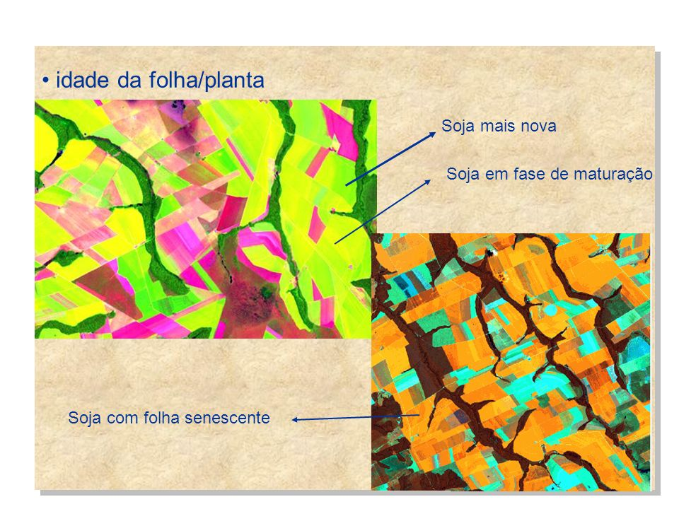 idade da folha/planta Soja mais nova Soja em fase de maturação