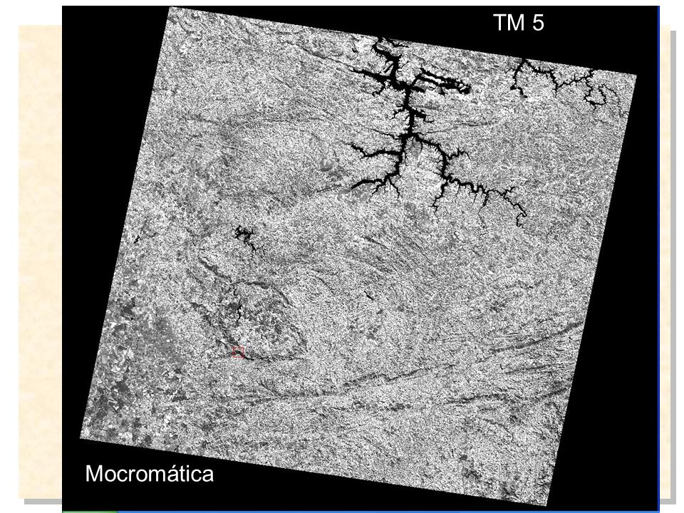 TM 5 Mocromática