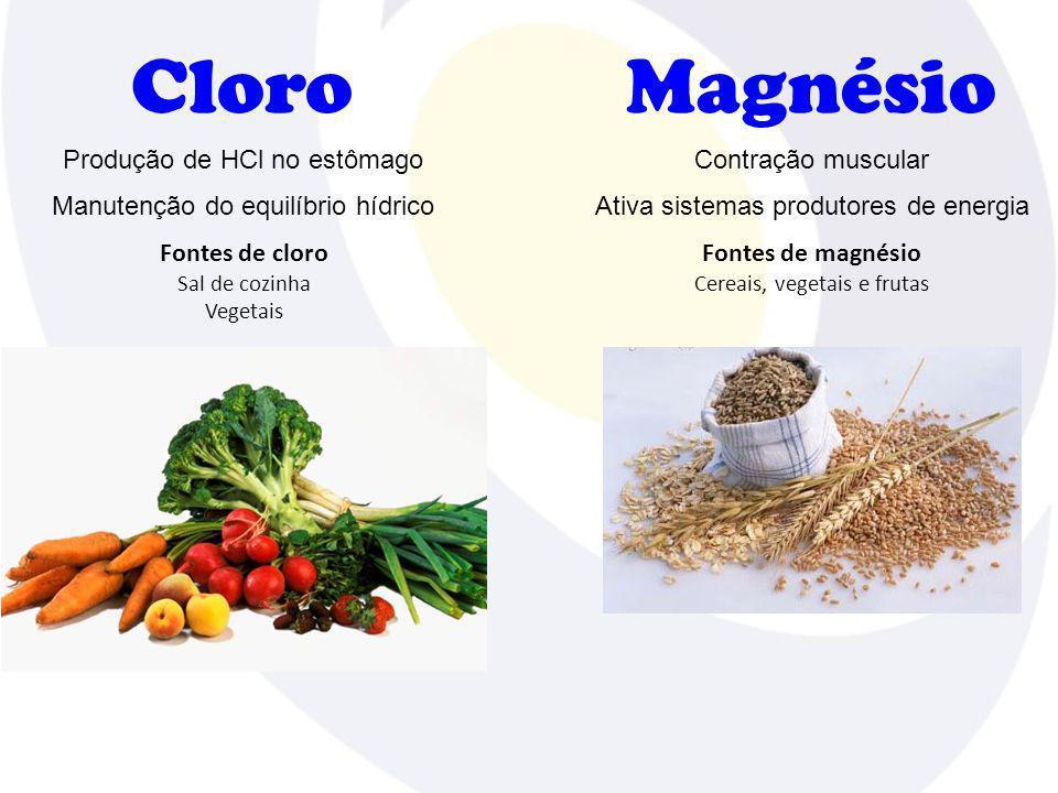 Cloro Magnésio Produção de HCl no estômago Contração muscular