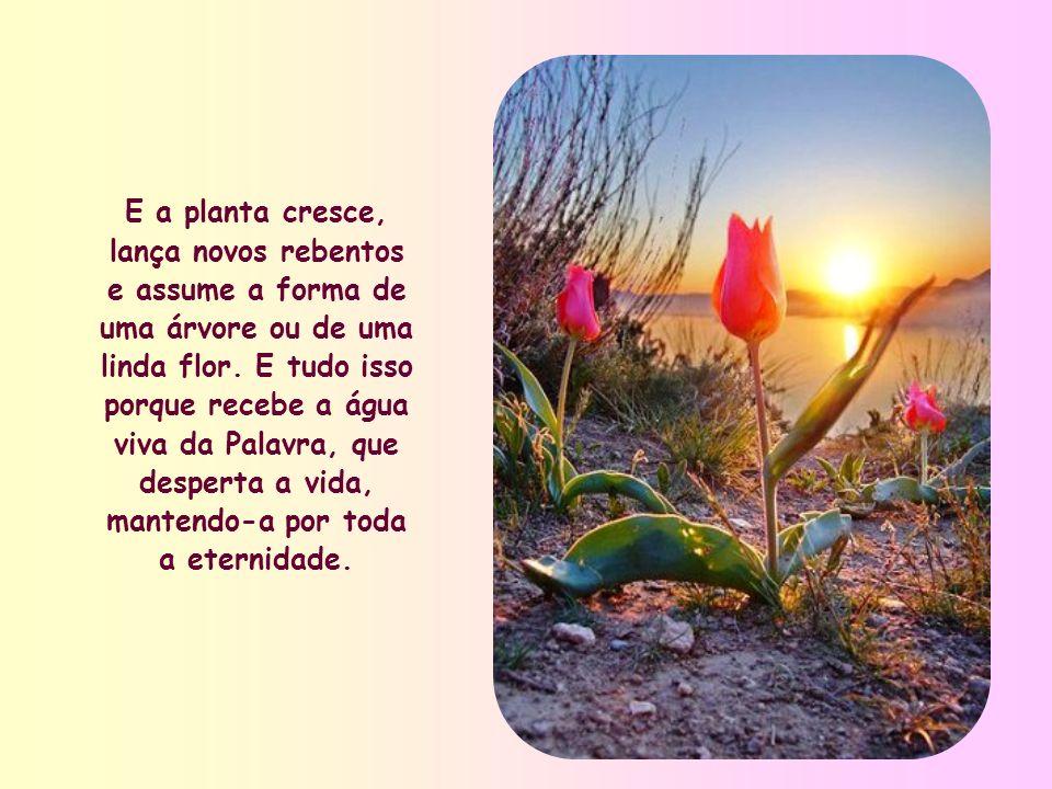 E a planta cresce, lança novos rebentos e assume a forma de uma árvore ou de uma linda flor.