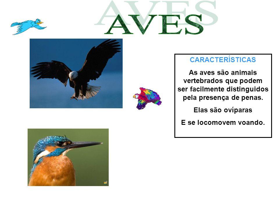 AVES CARACTERÍSTICAS. As aves são animais vertebrados que podem ser facilmente distinguidos pela presença de penas.