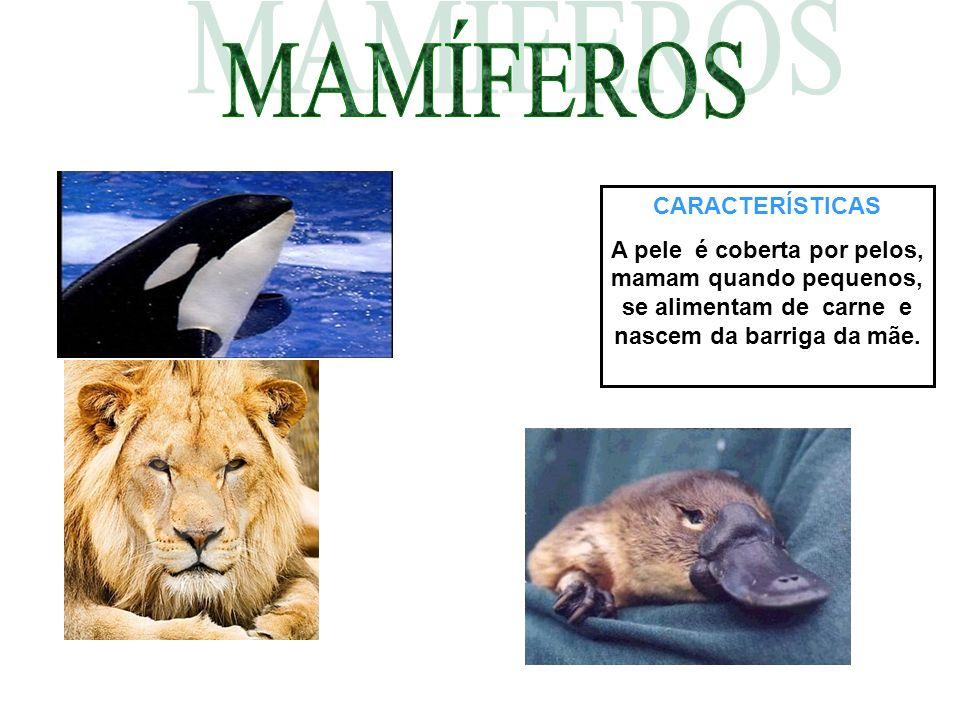 MAMÍFEROS CARACTERÍSTICAS