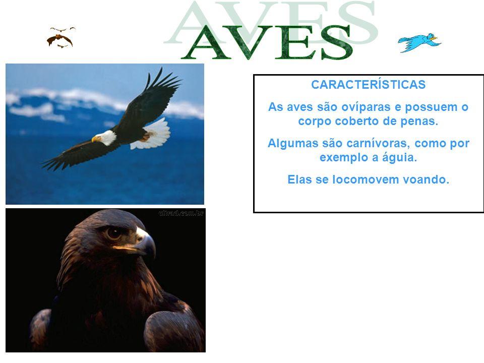 AVES CARACTERÍSTICAS. As aves são ovíparas e possuem o corpo coberto de penas. Algumas são carnívoras, como por exemplo a águia.