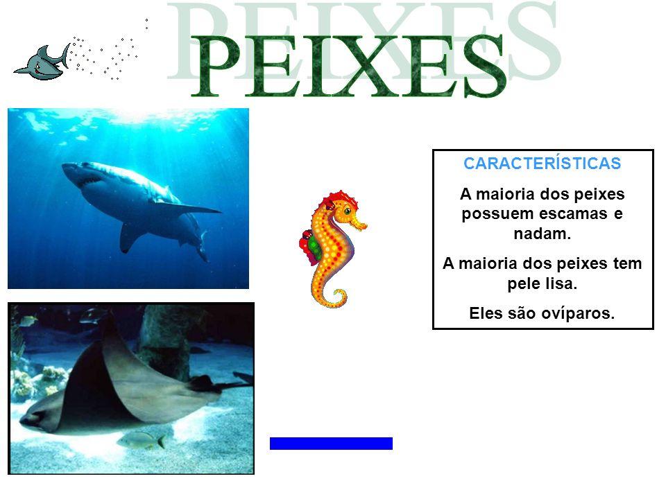 PEIXES CARACTERÍSTICAS A maioria dos peixes possuem escamas e nadam.