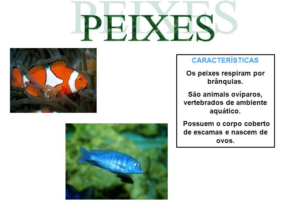 PEIXES CARACTERÍSTICAS Os peixes respiram por brânquias.