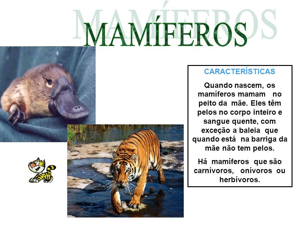 Há mamíferos que são carnívoros, onívoros ou herbívoros.