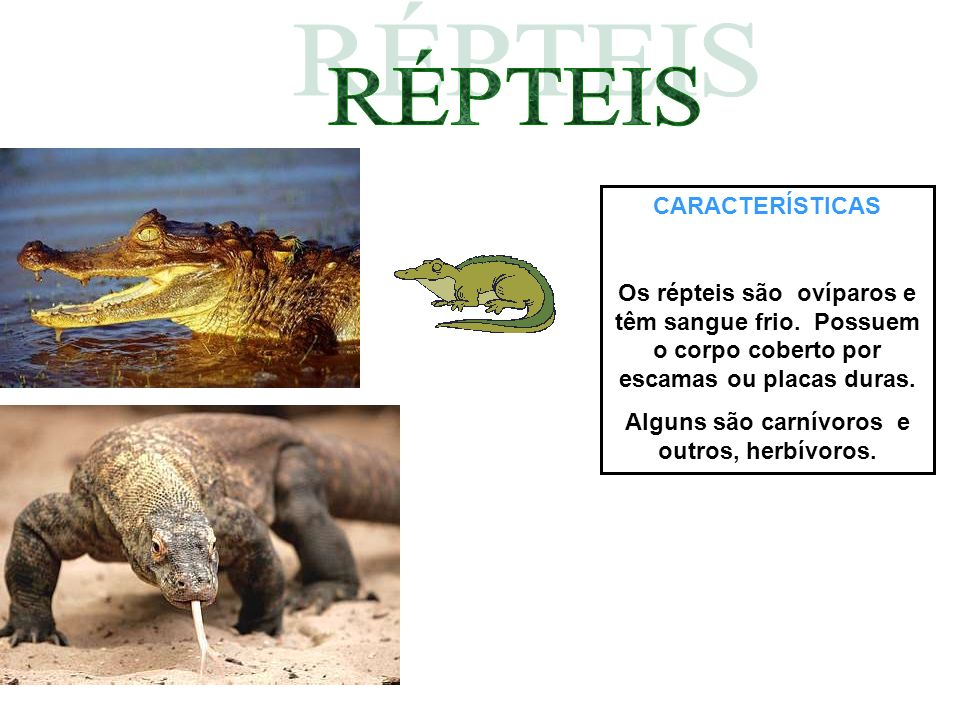 Alguns são carnívoros e outros, herbívoros.