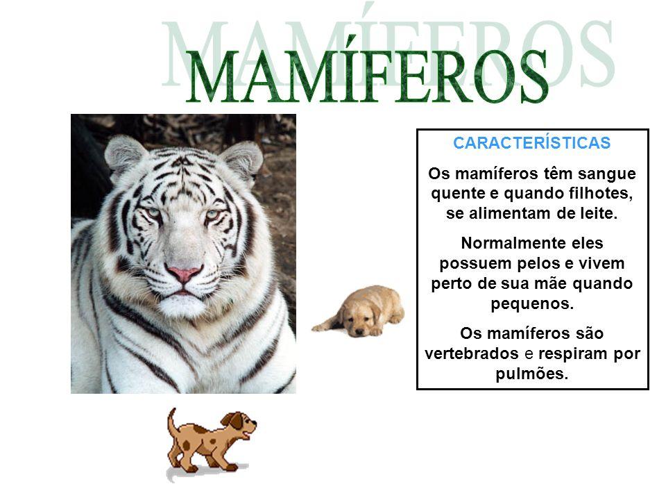 Os mamíferos são vertebrados e respiram por pulmões.