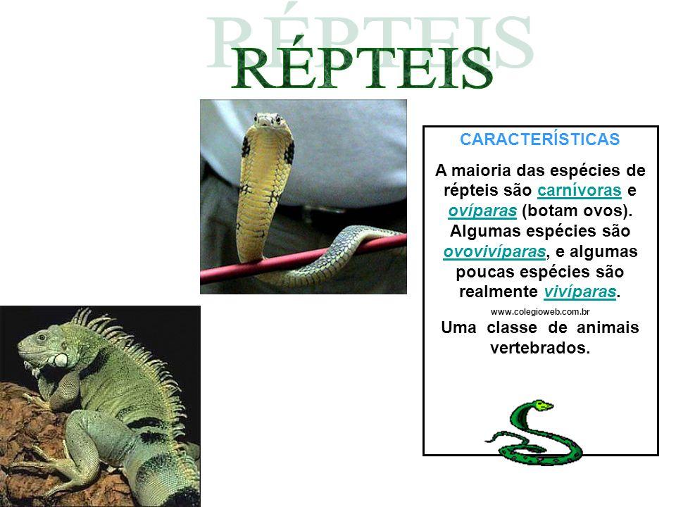 www.colegioweb.com.br Uma classe de animais vertebrados.