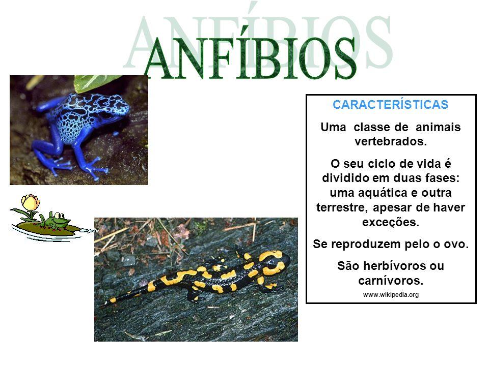 ANFÍBIOS CARACTERÍSTICAS Uma classe de animais vertebrados.
