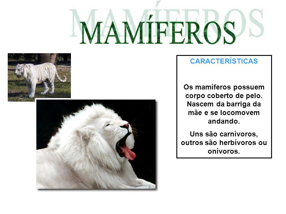 Uns são carnívoros, outros são herbívoros ou onívoros.