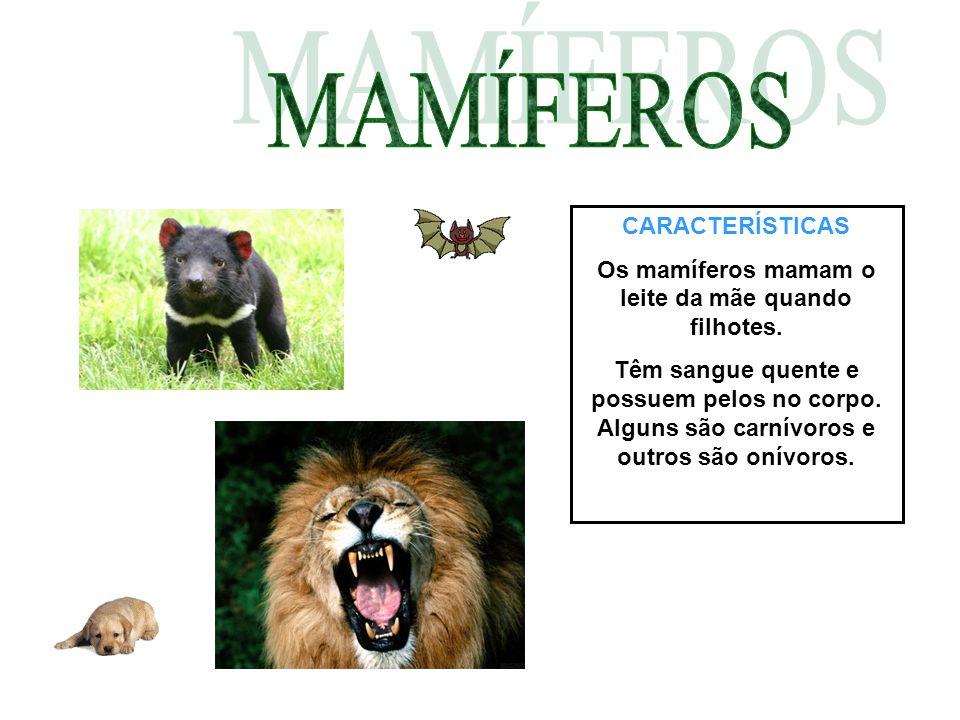 Os mamíferos mamam o leite da mãe quando filhotes.