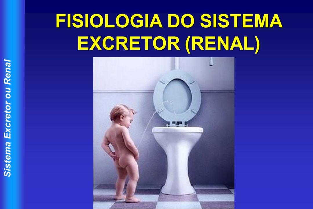 FISIOLOGIA DO SISTEMA EXCRETOR (RENAL)